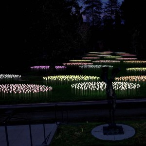 """""""Bruce Munro at Montalvo: Stories in Light"""" includes """"Silver Sea,"""" on display in the Great Lawn at Montalvo Arts Center, from October 25, 2018 through March 2019. """"Silver Sea"""" takes its visual reference both from C.S. Lewis and from two previous installations by Munro: """"Field of Light"""" exhibited at the Victoria and Albert Museum (2004) and """"Lilies"""" exhibited at Longwood Gardens (2012). The artist plans to scatter Montalvo's Great Lawn with clusters of """"lilies"""" created from over 4,000 stems and spheres of light. Seen here is a rendering of the world premiere installation at Montalvo Arts Center. Rendering courtesy of Bruce Munro."""