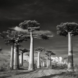 Beth Moon: Ancient Kingdoms works in platinum