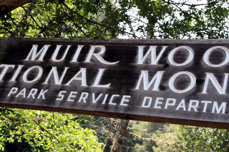 MuirWoods0018