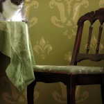 Still life with Lulu's Cat, Nichole