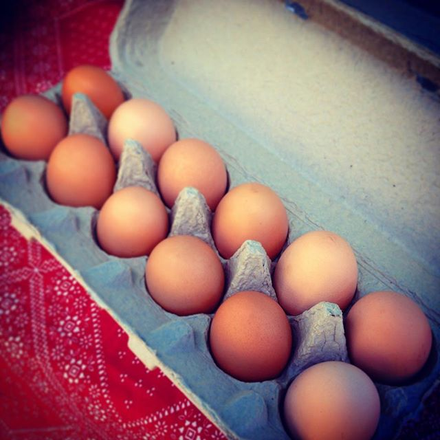 Fresh eggs at the BFM.