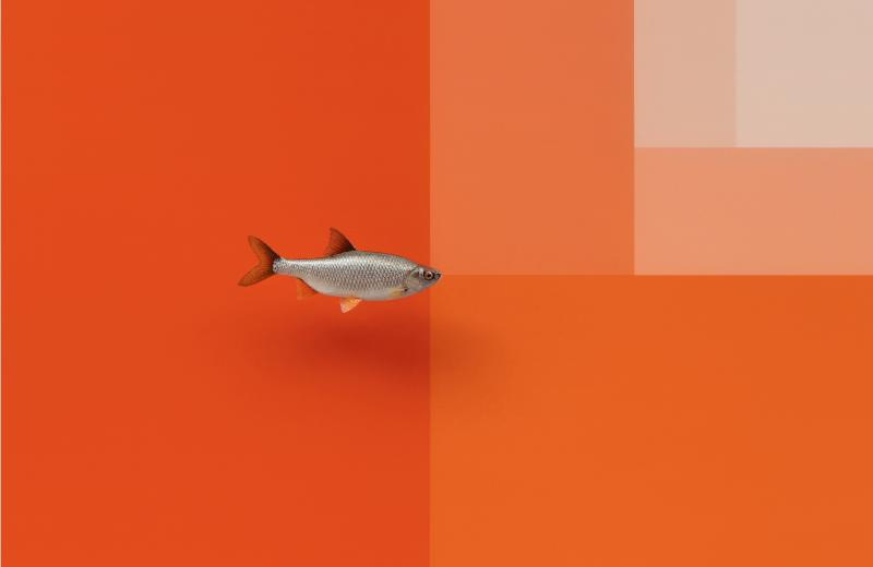 Divisions (Roach and Surface), 2016, acrylic glass, paint, stainless steel, screws, roach (fish taxidermy: Matthias Fahrni), 17 11/16 × 7 1/2 × 29 1/2 inches (45 × 19 × 75 cm) (unframed). Carsten Höller. Courtesy Gagosian Gallery.