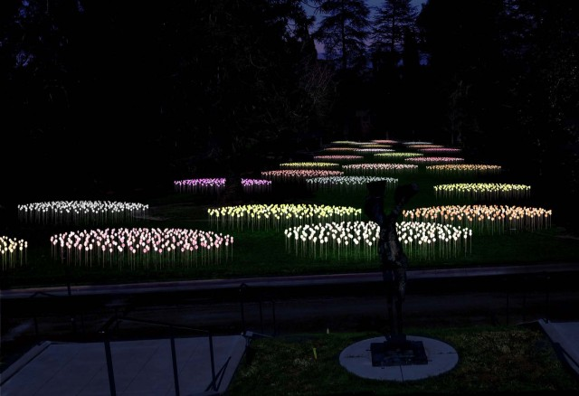 """Bruce Munro at Montalvo: Stories in Light"" includes ""Silver Sea,"" on display in the Great Lawn at Montalvo Arts Center, from October 25, 2018 through March 2019.  ""Silver Sea"" takes its visual reference both from C.S. Lewis and from two previous installations by Munro: ""Field of Light"" exhibited at the Victoria and Albert Museum (2004) and ""Lilies"" exhibited at Longwood Gardens (2012). The artist plans to scatter Montalvo's Great Lawn with clusters of ""lilies"" created from over 4,000 stems and spheres of light. Seen here is a rendering of the world premiere installation at Montalvo Arts Center.  Rendering courtesy of Bruce Munro."