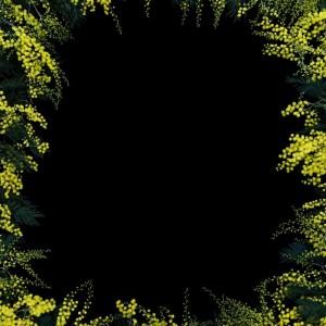 Acacia Flowers, J. John Priola, 2018
