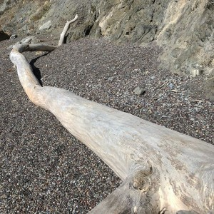 Kimberly Kradel: Driftwood at Goat Rock Beach in Sonoma County