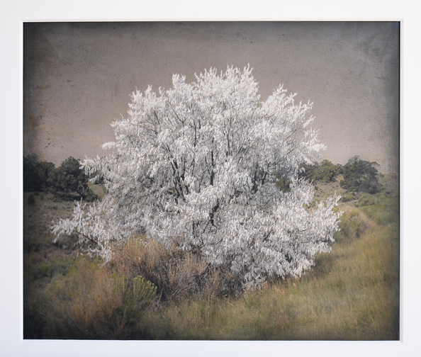 Tree Stories: Kate Breakey