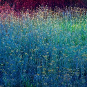 Christopher Rodriguez | Montana Quarantine: Flower Field | Archival pigment print | 45 x 60 inches