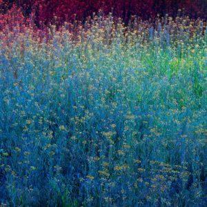 Christopher Rodriguez | Montana Quarantine: Flower Field | Archival pigment print | 45 x 60 inches