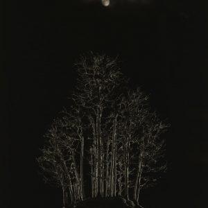 "Yamamoto Masao, Bonsai #4003, 2018, gelatin silver print., 14"" x 11"", edition of 10"